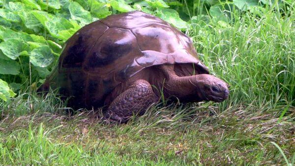 Najstarszy żółw na świecie, Jonathan - Sputnik Polska