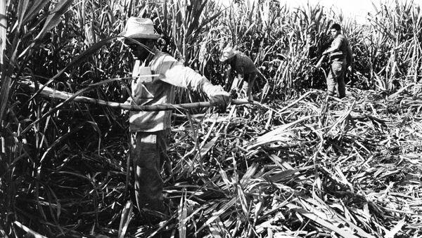 Pole trzciny cukrowej na Kubie - Sputnik Polska