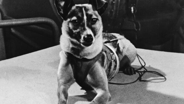 Pies kosmonauta Łajka - Sputnik Polska