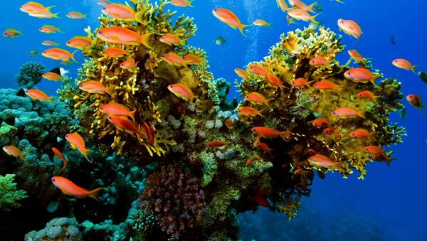 Ryby na tle rafy koralowej - Sputnik Polska