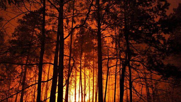Pożary w podmoskiewskich lasach - Sputnik Polska