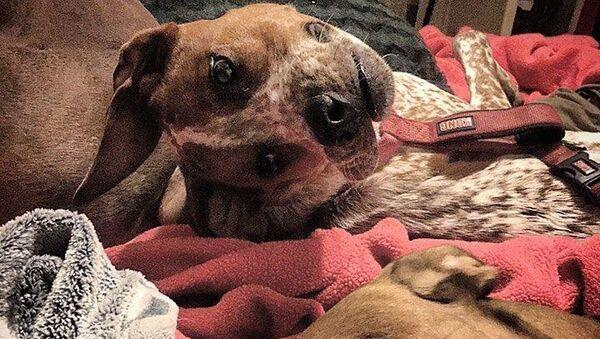 Оптическая иллюзия фотографии с двумя собаками - Sputnik Polska
