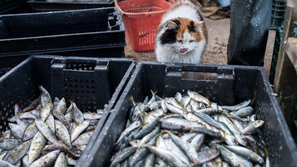 Polityka handlowa prezydenta USA Donalda Trumpa doprowadziła do tego, że amerykańskich producentów ryb wypierają rosyjscy - Sputnik Polska