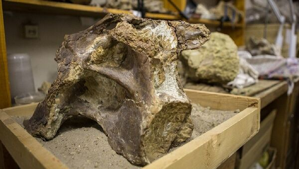 Skamieniałości dinozaura Sibirotitan astrosacralis - Sputnik Polska