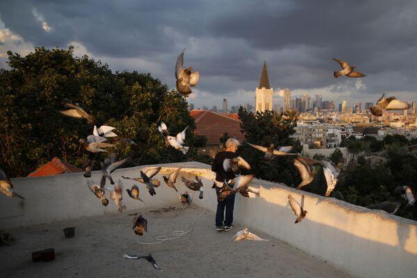 Kobieta karmi ptaki na dachu domu w Tel Awiwie. - Sputnik Polska