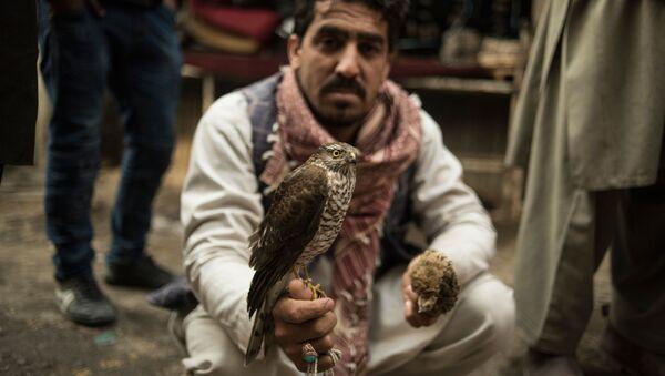 Sprzedawca ptaków, Kabul - Sputnik Polska