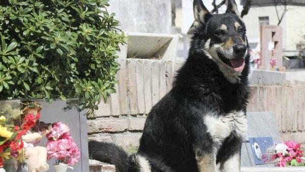 Wierny pies Kapitan - Sputnik Polska
