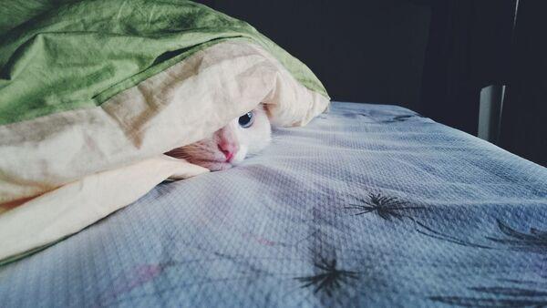 Kot pod kołdrą - Sputnik Polska