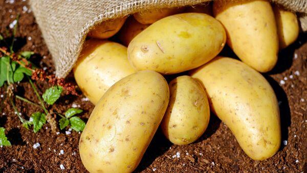 Bulwy ziemniaka - Sputnik Polska