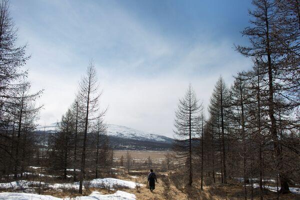 Łowca reniferów Erdenbat Chuluu idzie przez las niedaleko wsi Cagaannguur, Huvsgel, Mongolia - Sputnik Polska