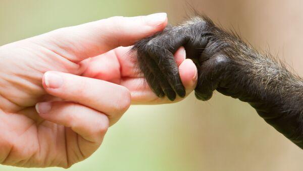 Kobieta trzyma małpkę za rękę - Sputnik Polska