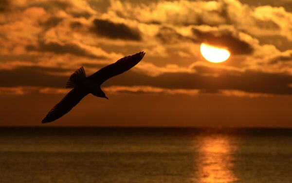 Ptak leci nad jeziorem Bajkał - Sputnik Polska