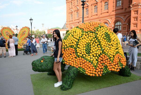 Figura żółwia zrobiona z owoców na placu Czerwonym w Moskwie w ramach festiwalu Lato moskiewskie. Festiwal konfitury - Sputnik Polska