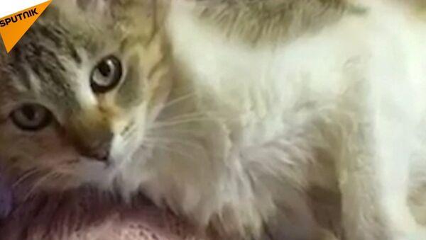 Niezwykła kotka - Sputnik Polska