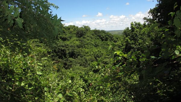 Las w Mozambiku - Sputnik Polska