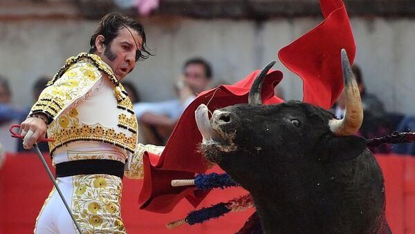 Hiszpański matador Jose Padilla podczas korridy - Sputnik Polska