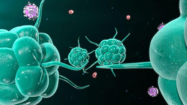 Komórki rakowe - Sputnik Polska