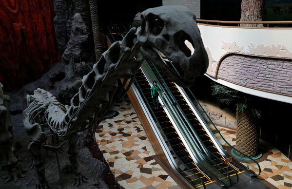 Muzeum Historii Naturalnej w Pjongjangu - Sputnik Polska