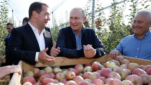 Przewodniczący rosyjskiego rządu Dmitrij Miedwiediew i prezydent Rosji Władimir Putin w sadzie jabłoniowym w Kraju Stawropolskim - Sputnik Polska
