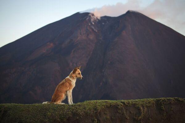 Wulkan Pacaya w Gwatemali - Sputnik Polska