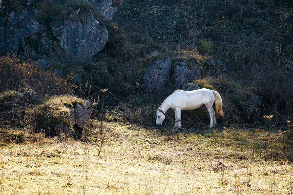 Koń na przyrodzie w Republice Adygei - Sputnik Polska