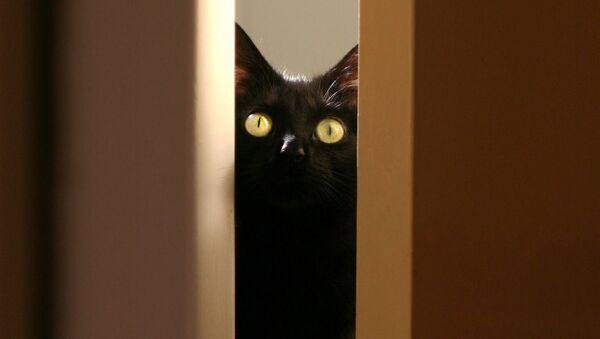 Czarny kot - Sputnik Polska