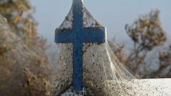 Krzyż w pajęczynie, Grecja - Sputnik Polska