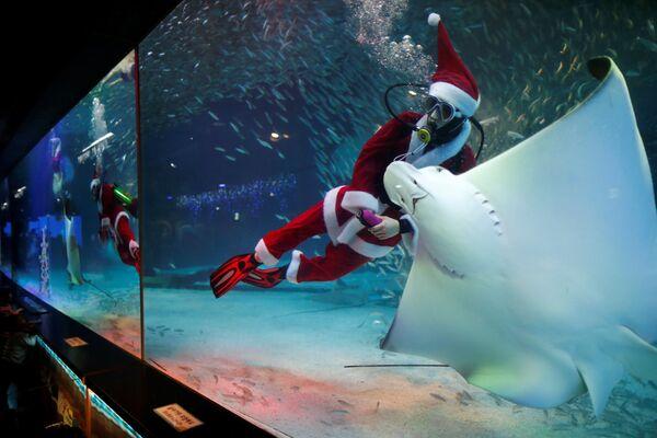 Nurek w kostiumie Świętego Mikołaja podczas występu w Seulu - Sputnik Polska