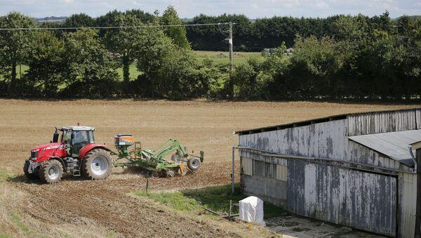 Francuskie gospodarstwo rolne przed zbiorem plonów - Sputnik Polska