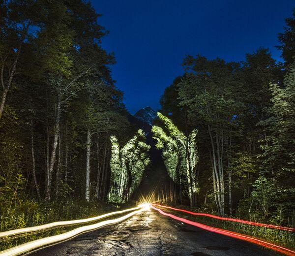 Animacja świetlna na drzewach w Nizinie Amazonki - Sputnik Polska